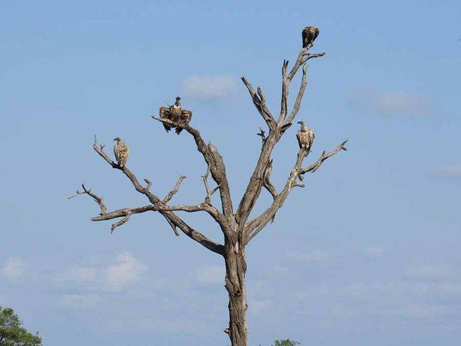 4 Days Big Five Safari in South Africa
