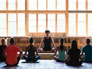 8 Days Forest Bathing, Meditation, and Yoga Retreat in Japan