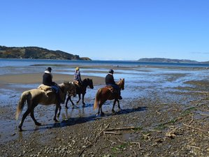 4 Day Seaside Horse Riding Holiday in the Stunning Gem Chiloe Island, Los Lagos Region