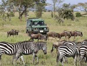 4 Days Wonderful Express Safari in Tanzania
