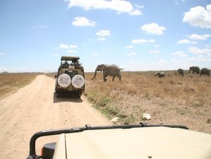 3 Days Private Tour to Top National Parks in Northern Circuit Migration Safari in Tanzania