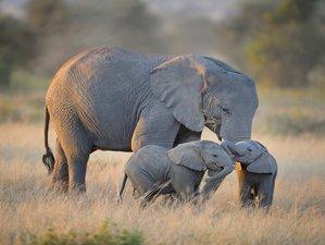 10 Days Maasai Mara, Lake Naivasha, Amboseli, Tsavo East, and Diani Beach Safari in Kenya