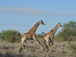 3 Days Basic Experience Safari in Kruger National Park, South Africa