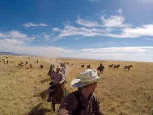 7 Day World Famous Horse Drive Ranch Vacation in Dubois, Idaho