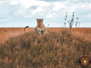 6 Days Highlights of Tanzania Safari Tour