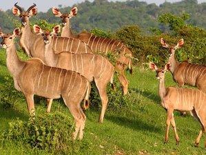 4-Daagse Prive Game Drive en Wandelsafari in Ruaha National Park, Tanzania