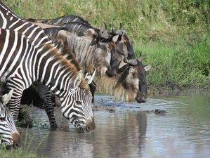 9 Days Northern Circuit Safari Tour in Tanzania