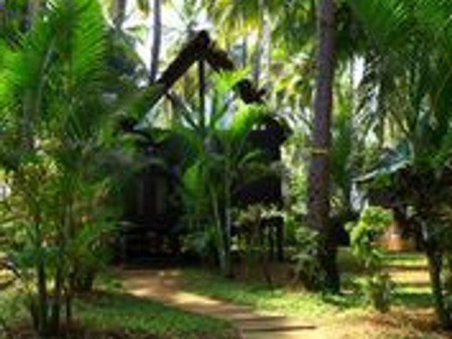 8 Days Yoga and Detox Retreat at Ashwem Beach, Goa