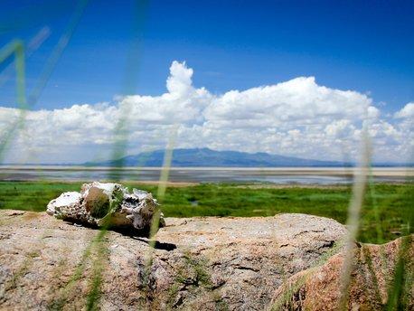 Manyara Region