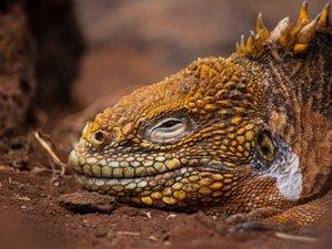 4 Day Wildlife Tour in Galapagos Islands, Ecuador