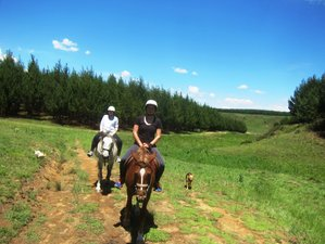 3 Days Introduction to Horse Riding in the South African Countryside, KwaZulu-Natal, South Africa