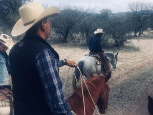 7 Day Authentic Hacienda Vacation with Daily Horse Riding Tours in Cananea, Sonora