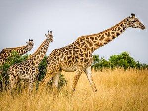 3 Days Road Safari in Samburu National Reserve, Kenya