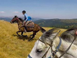 8 Days Bucephalus Trails Horse Riding Tour in Macedonia