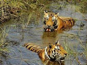 3 Days Wildlife Tour in Chitwan National Park, Subarnapur