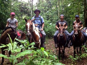 4 Day Forests and Wildlife Horseback Riding Vacation in Drake Bay, Puntarenas