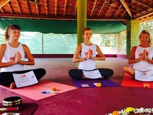 20-Daagse 200-Urige Intensieve Yoga Docentenopleiding in Goa, India