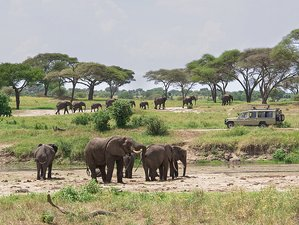 6 Days Amazing Camping Safaris in Tanzania
