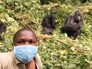 5 Days Gorilla and Golden Monkey Trekking Safari in Mgahinga Gorilla National Park, Uganda