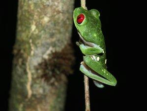 6 Day Ecoadventure Wildlife Tour in Puntarenas Area, Costa Rica