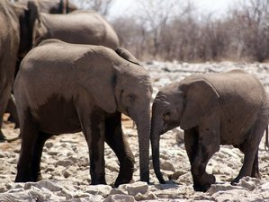 3 Days Tented Etosha National Park Safari