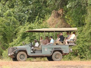 8 Days Best of Safari in Zambia and Malawi