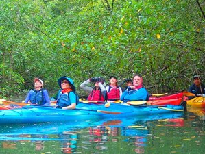 8 Day Sea Kayaking and Wildlife Tours in Golfo Dulce, Costa Rica