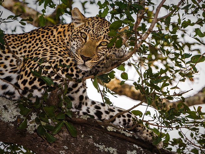 5 Days Exhilarating Treehouse Budget Safari Kruger National Park South Africa