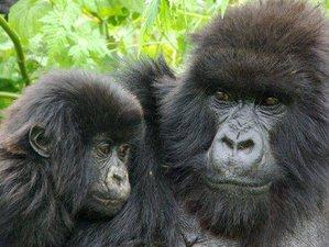 3 Days Mountain Gorilla Trekking Express in Bwindi Forest, Uganda
