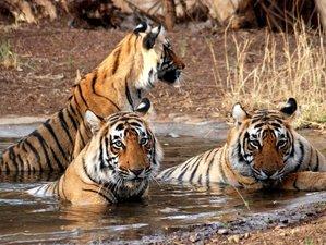 4 Day Royal Bengal Tiger and Bird Safari in Bardia National Park, Bardiya