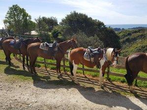 2 Days Custom Horse Riding Holiday in Taranaki, New Zealand