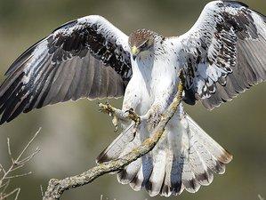 5 Days Raptors Photography Safari in Montsonís, Spain
