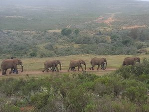 4 Days Garden Route Tour in South Africa