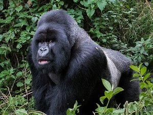 9 Days Birding and Gorilla Safaris in Uganda