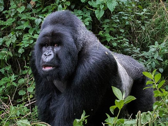 9 Days Birding and Gorilla Safaris in Uganda