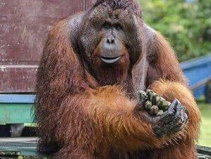 4 Day Orangutan Houseboat Tour in Tanjung Puting National Park, Indonesia