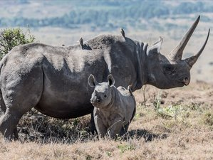 Rhinoceros Safaris
