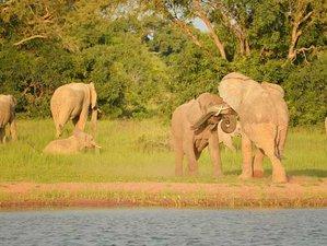 4 Days Mesmerizing Safari in Lake Tanganyika, Zambia