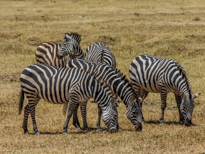 6 Days Fascinating Group Safari in Tanzania