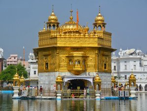 7 Day Tour of Golden Temple, Shimla, and Haridwar with Daily Yoga Practice in India