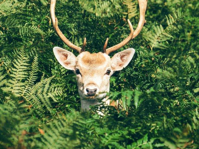 Deer Tours