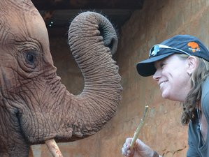 9 Day Preserving Africa's Wildlife Conservation Safari in South Africa