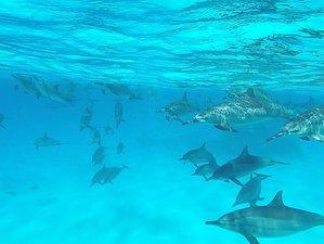 10 Tage Yoga-Delfinreise im Roten Meer, Ägypten