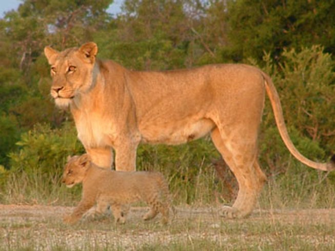 6 Days South African Safari Honeymoon