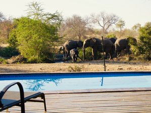 4 Days Big Five Safari in Greater Kruger National Park, South Africa