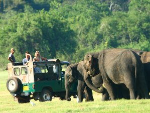 9 Day Unforgettable Whale Watching Experience and Wildlife Tour in Sri Lanka