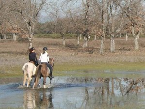 3 Day Horseback Riding Holiday at the Spanish Transhumance-Conquistadores Route in Oropesa