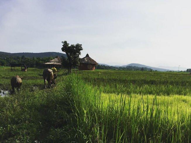 5-Daagse Wellness Meditatie Yoga Retraite in Thailand