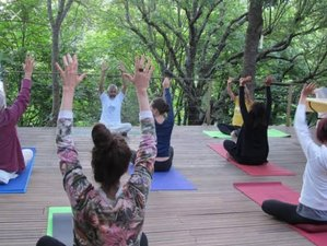 3 Day Holistic Approach for Your Wellbeing through Ayurveda and Yoga in Munnar, Kerala