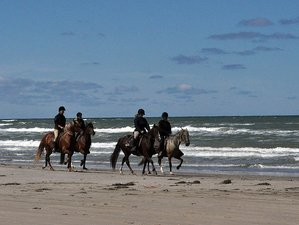 3 Days Weekend Horse Riding Holiday in Tversted, Denmark